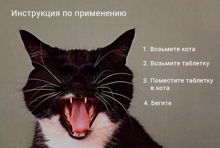 Как правильно дать таблетку коту